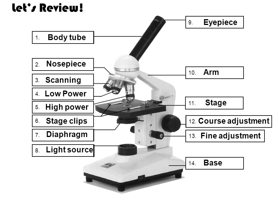 Let's Review! Eyepiece Body tube Nosepiece Arm Scanning Low Power