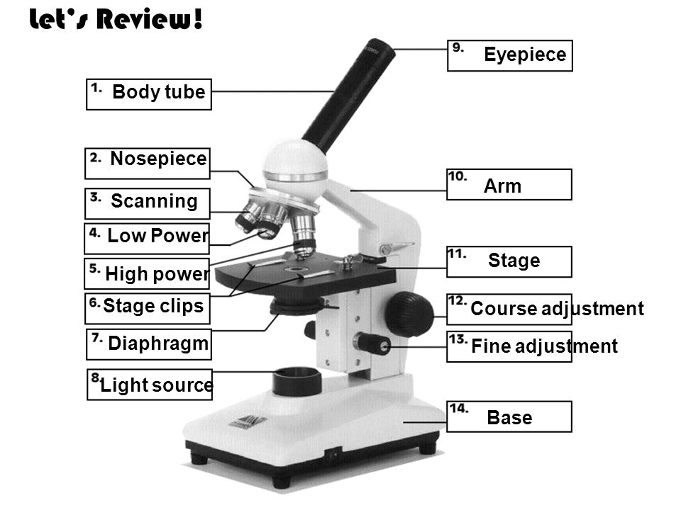 So Let's Review Let's Review! Eyepiece Body tube Nosepiece Arm