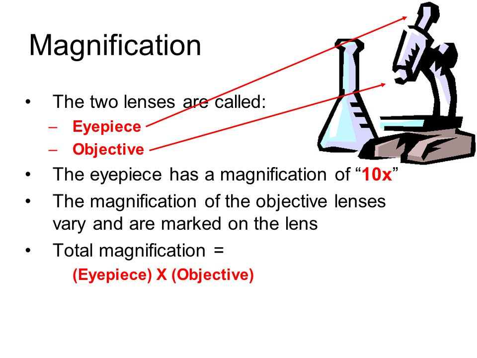 Magnification The two lenses are called: