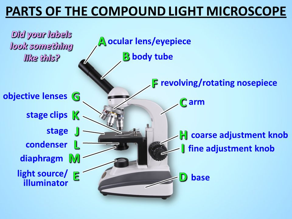 Microscope parts ppt video online download 23 did ccuart Images