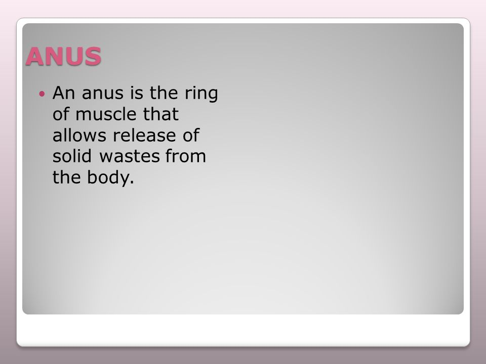 ANUS An anus is the ring of muscle that allows release of solid wastes from the body.