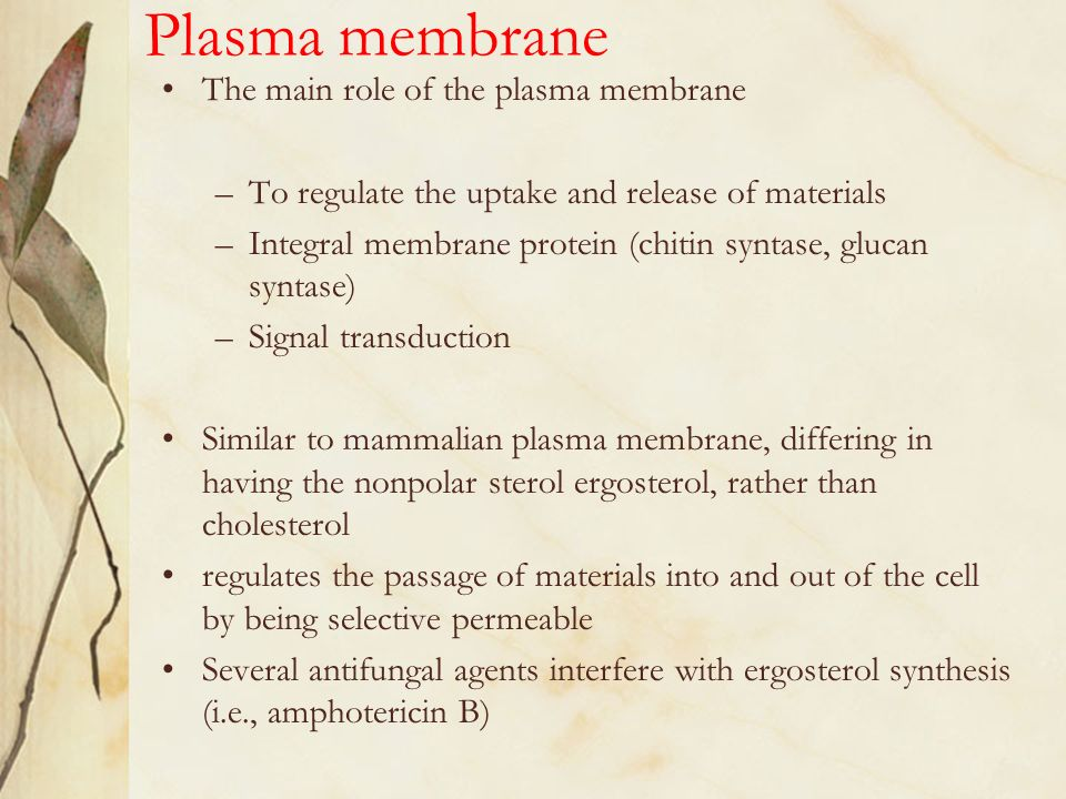 the role of the plasma membrane Transport across cell membranes facilitated diffusion  the diffusion of water through the plasma membrane is of such importance to the cell that it is given a.