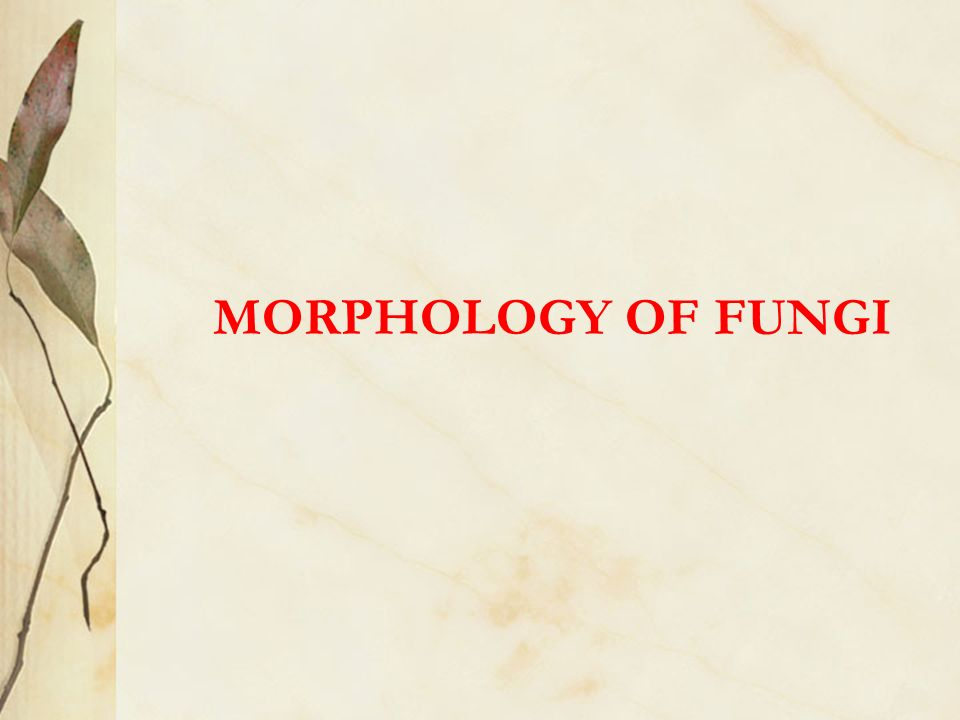 fungi ppt video online download