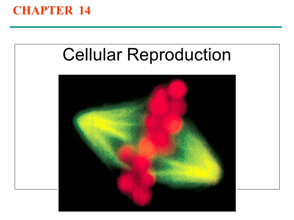 cellular reproduction Levels of reproduction molecular replication the characteristics that an organism inherits are largely stored in cells as genetic information in very long molecules of deoxyribonucleic acid (.