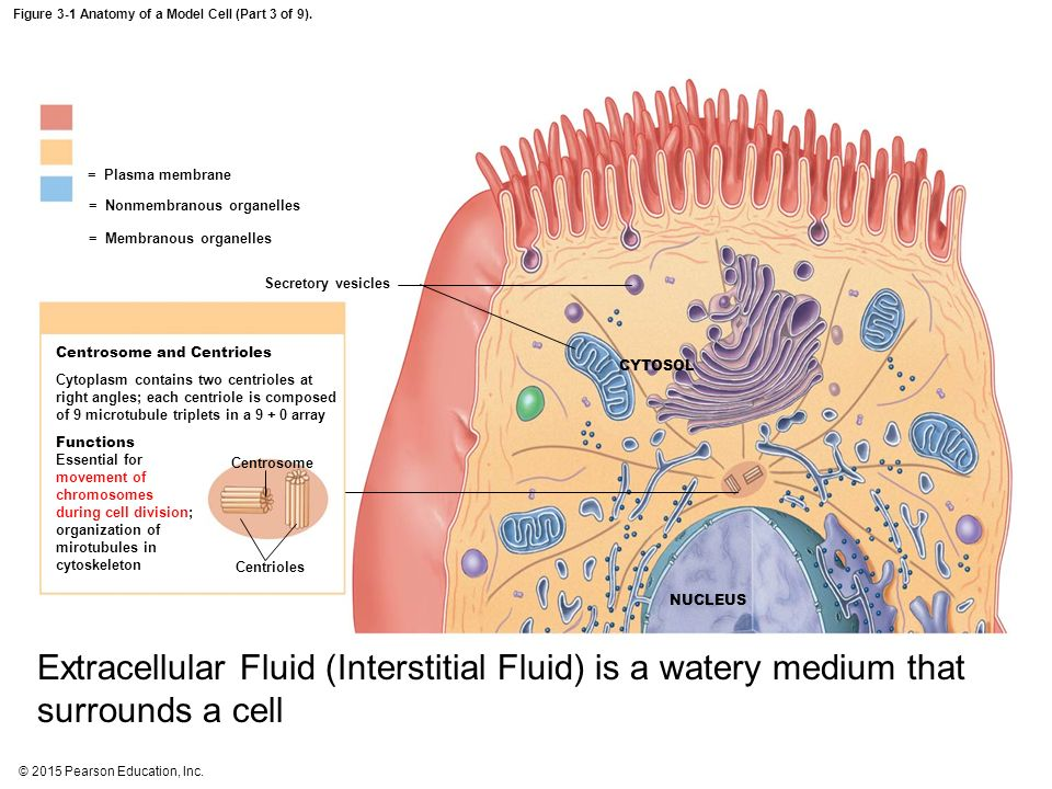 The anatomy of a cell