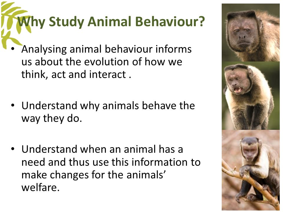 Study a postgraduate course in Animal Behaviour and ...