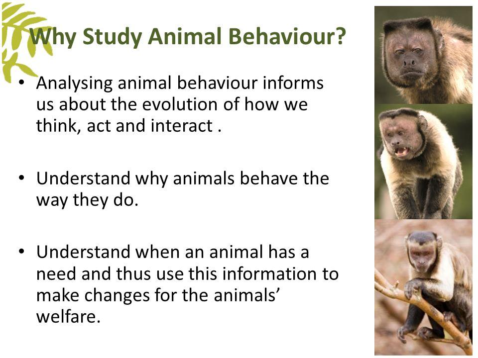 Why do you need to study human behavior - answers.com