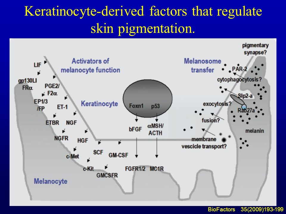 BIOCHEMISTRY... Keratin Structure And Function Ppt