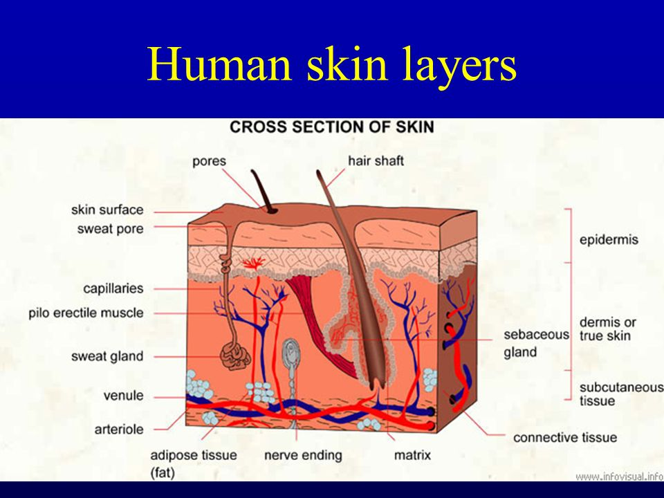 BIOCHEMISTRY OF SKIN BIOCHEMIE KŮŽE - ppt download