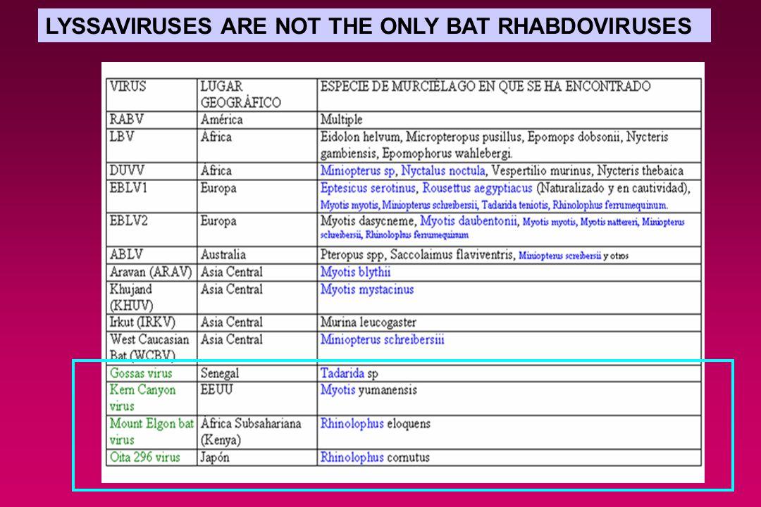 LYSSAVIRUSES ARE NOT THE ONLY BAT RHABDOVIRUSES
