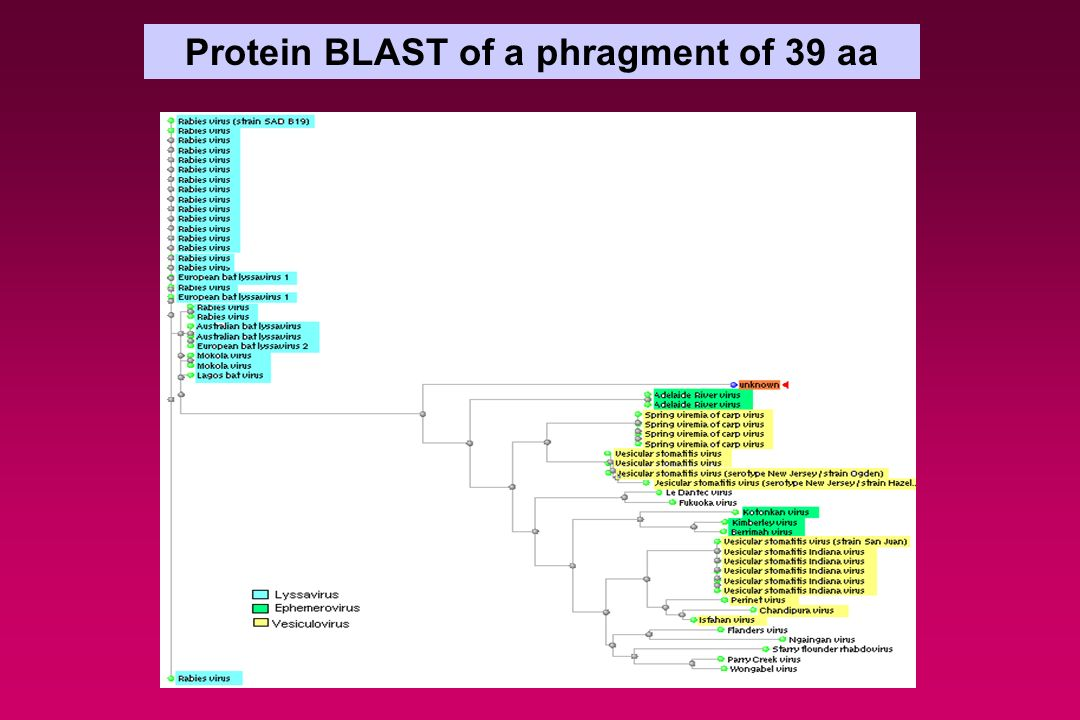 Protein BLAST of a phragment of 39 aa