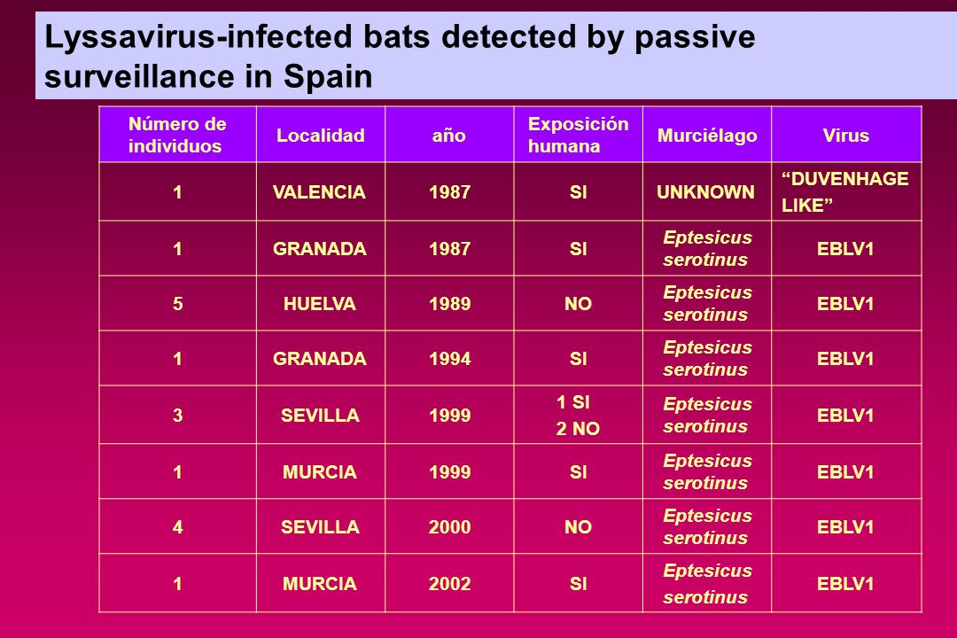 Lyssavirus-infected bats detected by passive surveillance in Spain