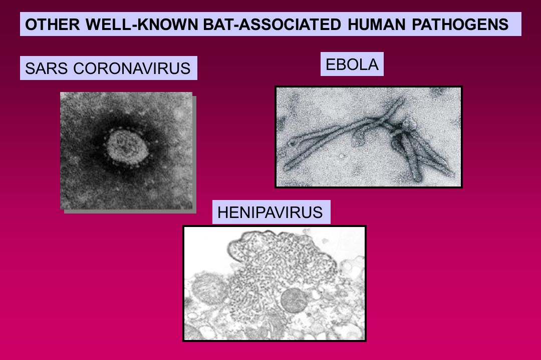 OTHER WELL-KNOWN BAT-ASSOCIATED HUMAN PATHOGENS