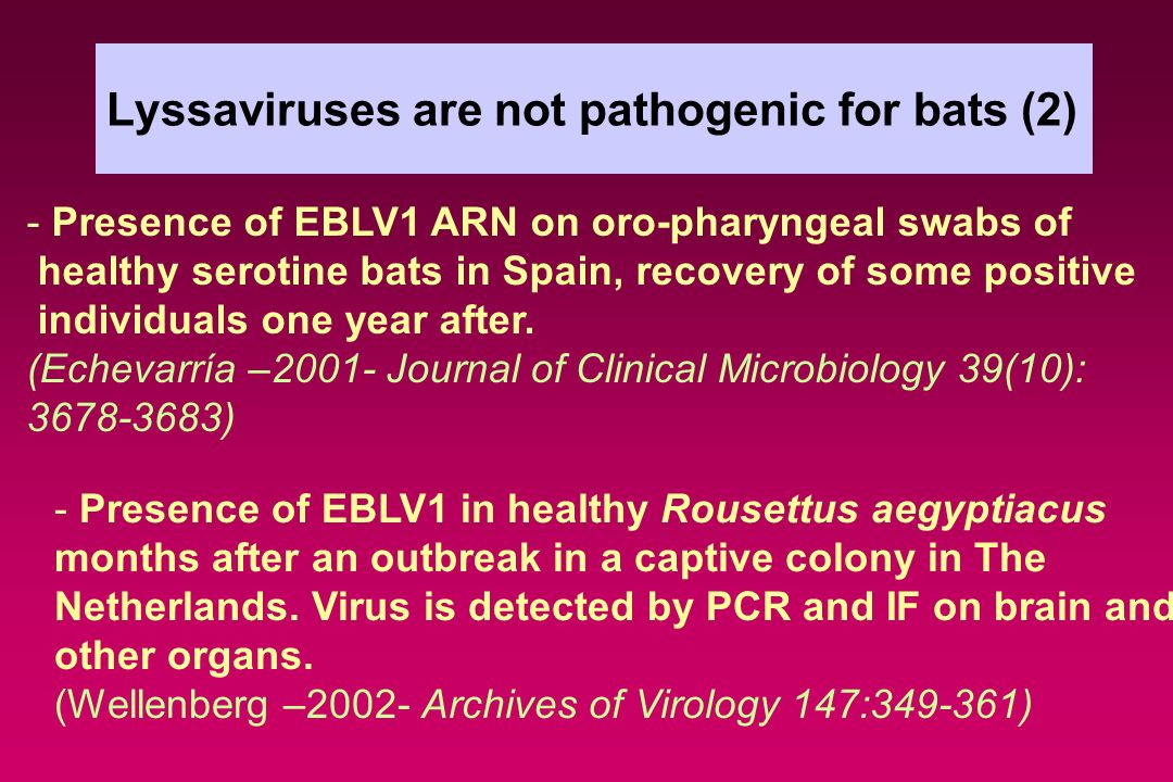 Lyssaviruses are not pathogenic for bats (2)