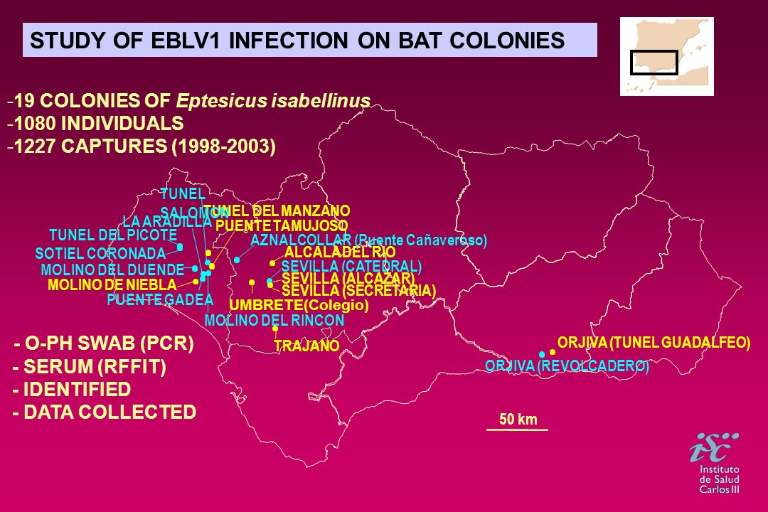 STUDY OF EBLV1 INFECTION ON BAT COLONIES