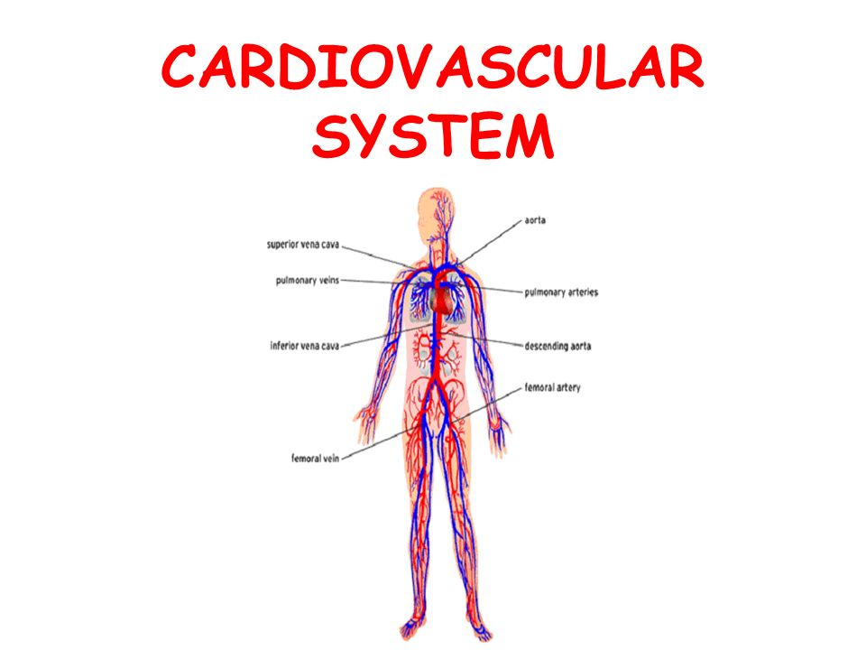 CARDIOVASCULAR SYSTEM - ppt video online download