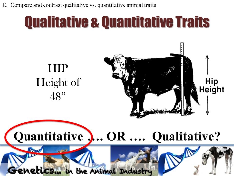 compare and contrast qualitative and quantitaitve A qualitative researcher can be a part of the process qualitative research is done in order to develop a theory quantitative research takes the idea a step further and seeks to test that theory.