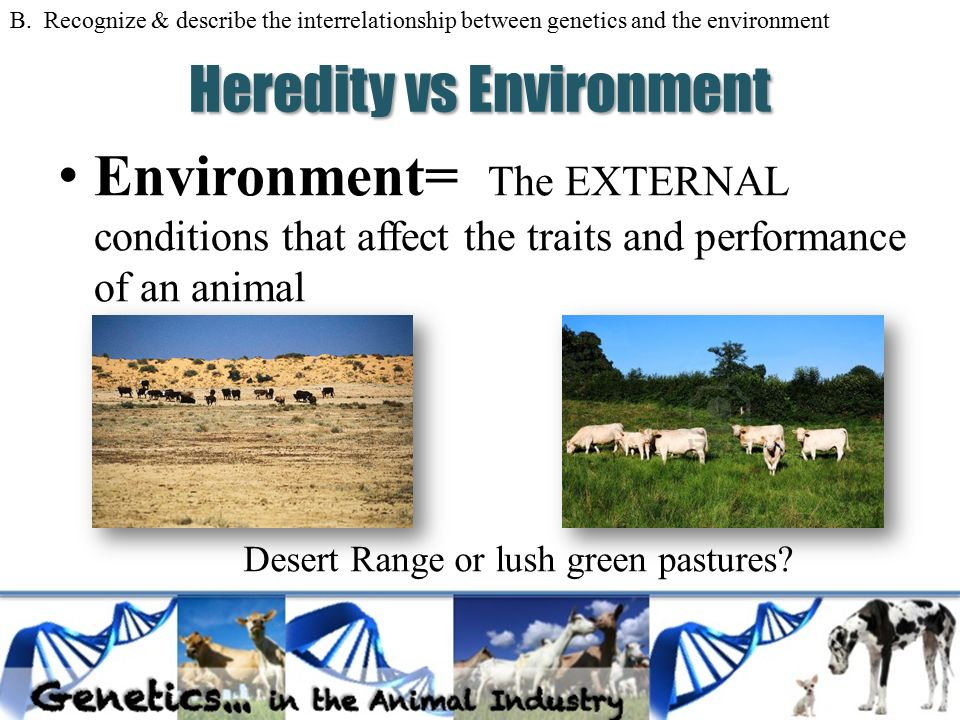 environmental vs genetics Many people like to debate where their children get their personalities and habits from the research paper below gives a comparison of expert view along with a personal touch.