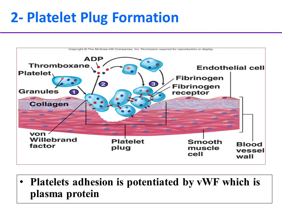What Is a Platelet Plug?