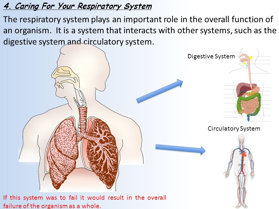 an introduction to the digestive system in humans