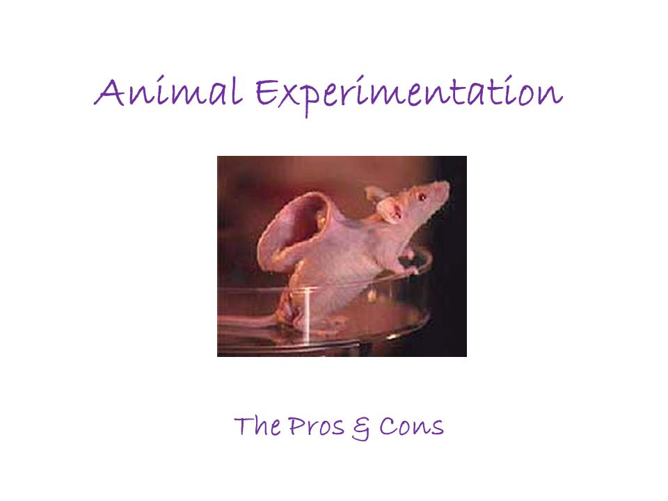 cons for animal testing essay Should animals be used for scientific or commercial testing read pros and  cons in the debate.