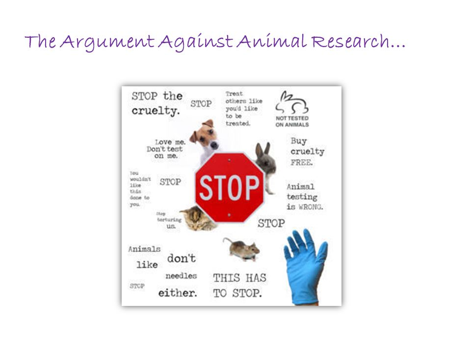 an argument against the process of animal experimentation Essay on animal testing: vital necessity or cruelty in:  either in favor or against animal experimentation  is the fact that in the process animals are kept.