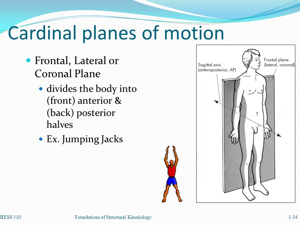 Anatomical Terminology also Terminology in addition 5053476 furthermore 240776 together with Kidneys. on plane divides upper and lower body