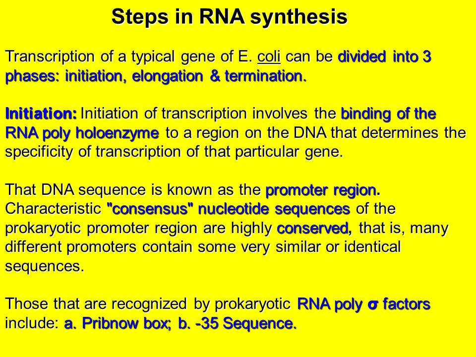 how to find promoter sequence of a gene