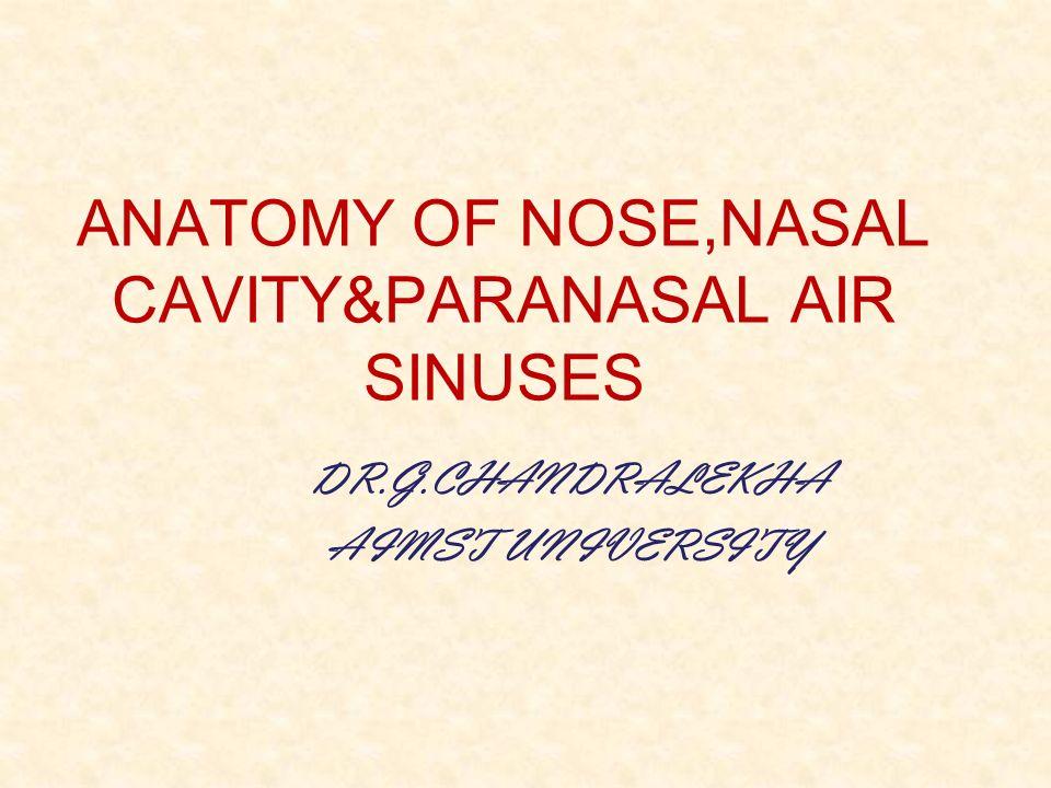 Anatomy Of Nosenasal Cavityparanasal Air Sinuses Ppt Video