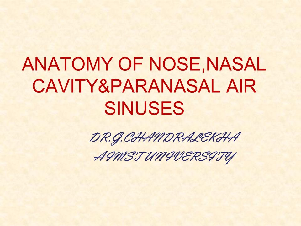 Anatomy Of Nose Choice Image Human Anatomy Diagram Organs