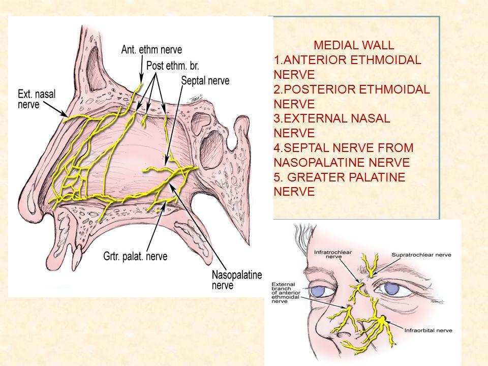 Cervical lymph node anatomy