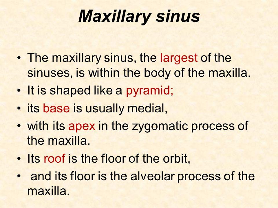 Anatomy of nosenasal cavityparanasal air sinuses ppt for Floor of the maxillary sinus