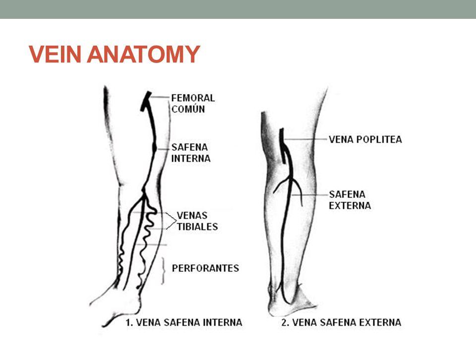 Contemporáneo La Vena Safena Externa Cresta - Anatomía de Las ...