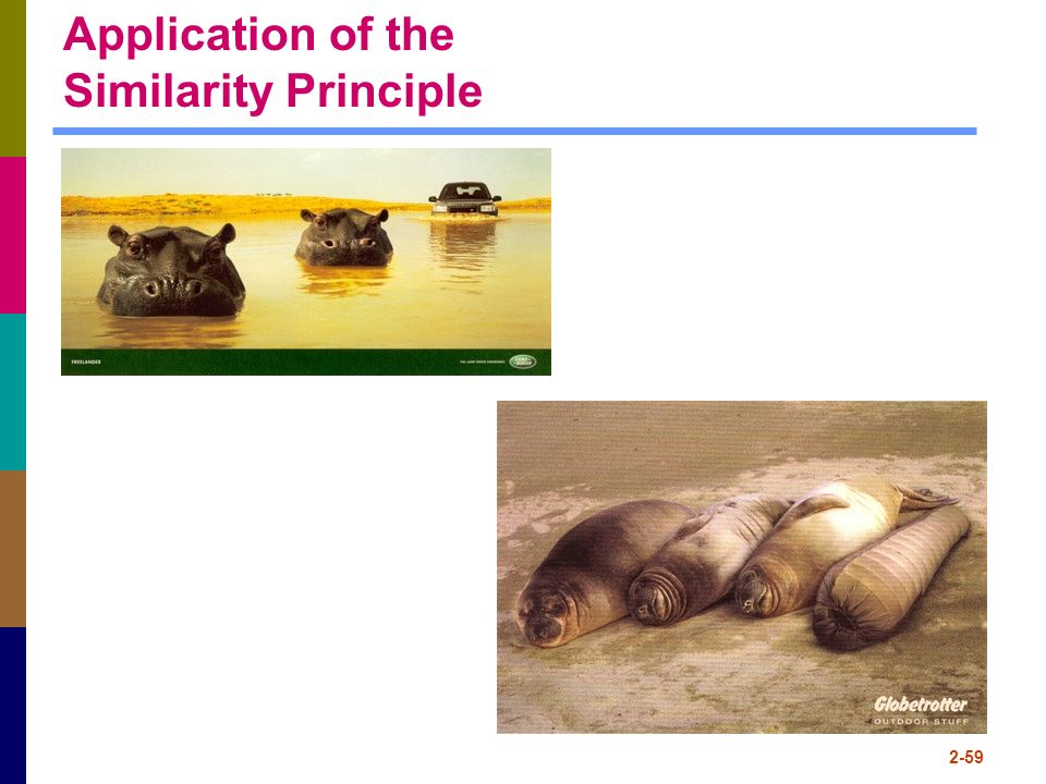 Application of the Similarity Principle