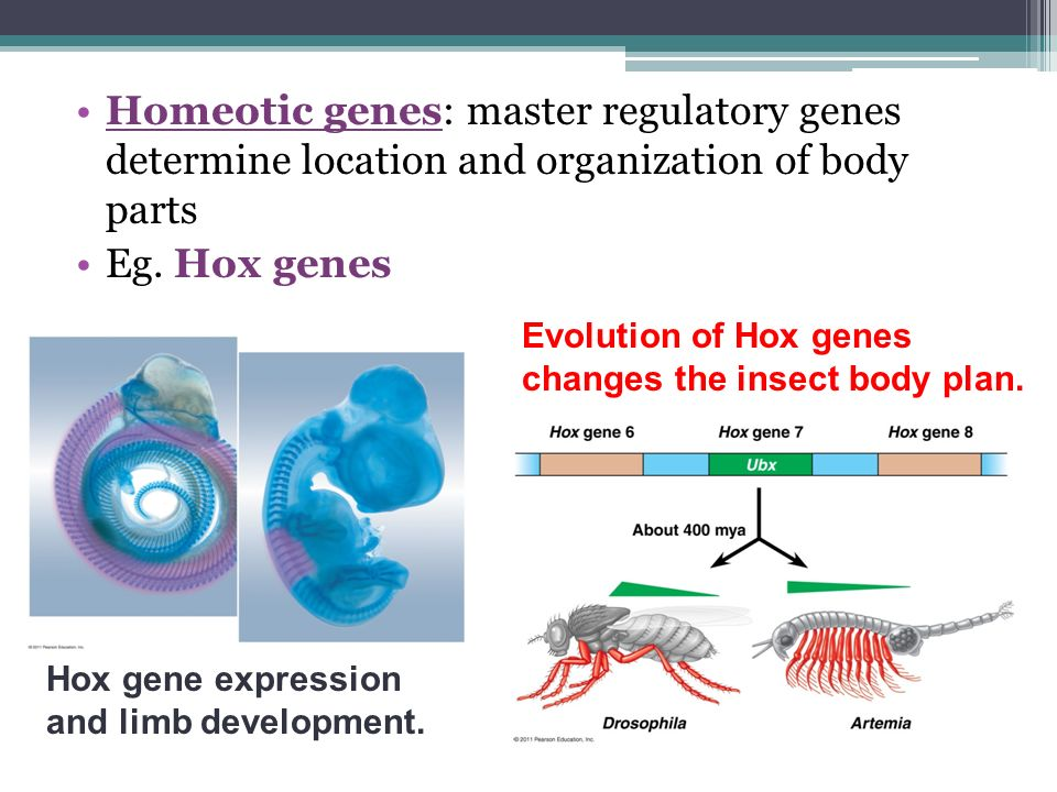 determination of the body by genes Gender determination human body cells have 23 pairs of chromosomes chromosome: one of the rod shaped bodies found in the nucleus of cells that contain genetic information (dna) in the nucleus [nucleus: controls what happens inside the cell.