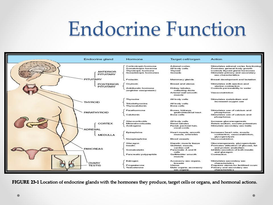endocrine systems the actions of hormones on target cells The endocrine system is a chemical messenger system consisting of hormones, the group of glands of an organism that carry those hormones directly into the circulatory system to be carried towards distant target organs, and the feedback loops of homeostasis that the hormones drive.
