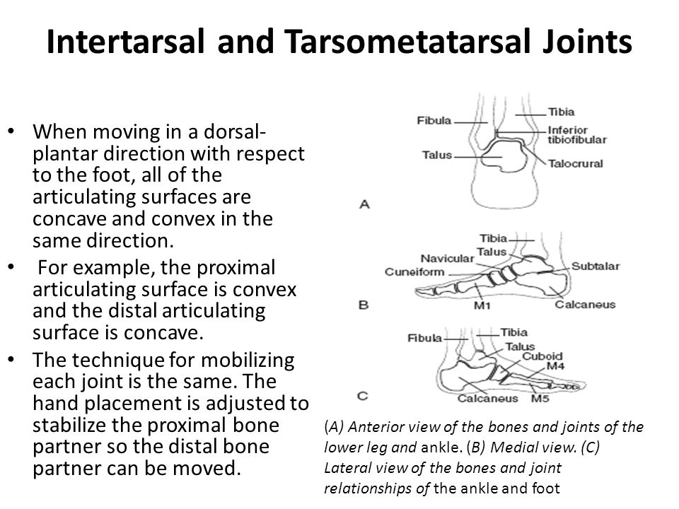 Intertarsal and Tarsometatarsal Joints