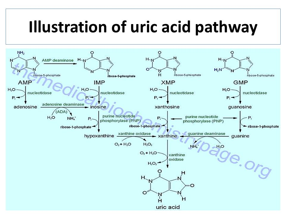 Uric Acid Pathway Creatinine Creatinine ...