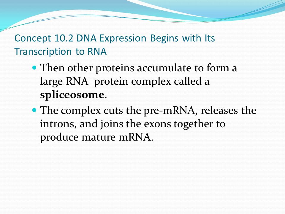 From DNA to Protein: Gene Expression - ppt download