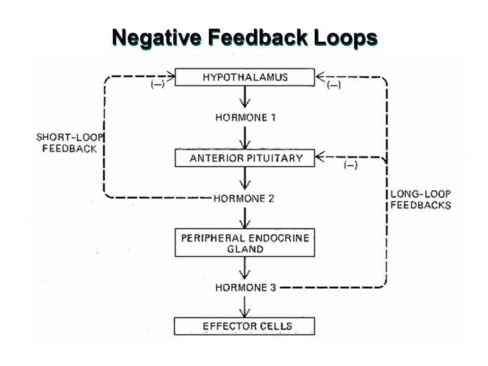 the mechanism of negative feedback essay Every reader of this essay will have read or heard phrases such as 'the   suggests a very elegant mechanism: skin cells respond to tension by.