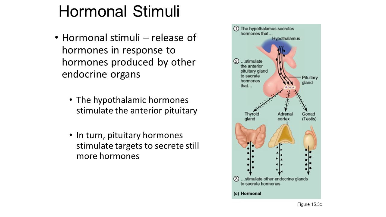 hormone�target cell specificity ppt video online download