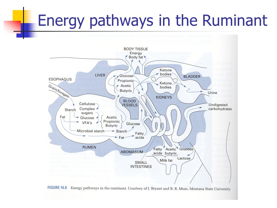 The Three Metabolic Energy Systems