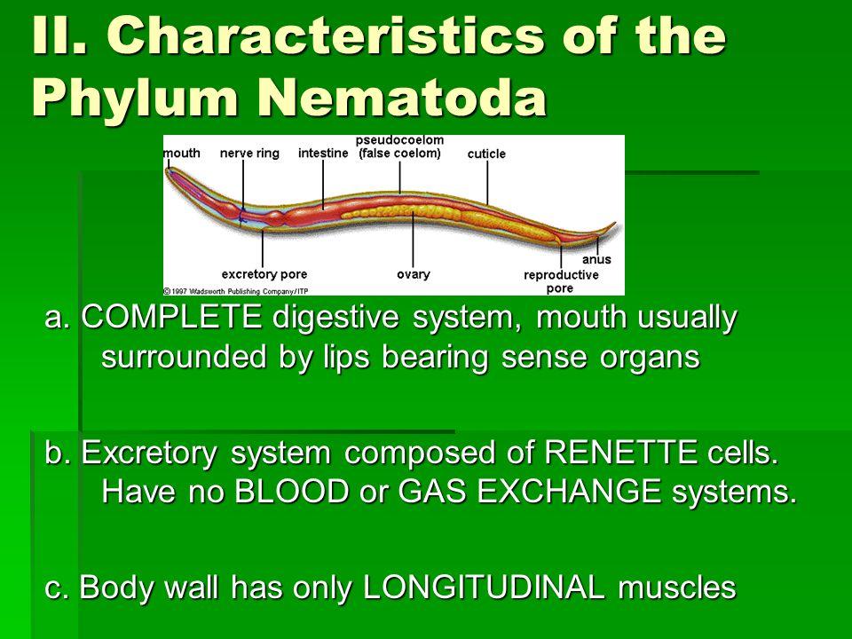 Phylum Nematoda. - ppt...