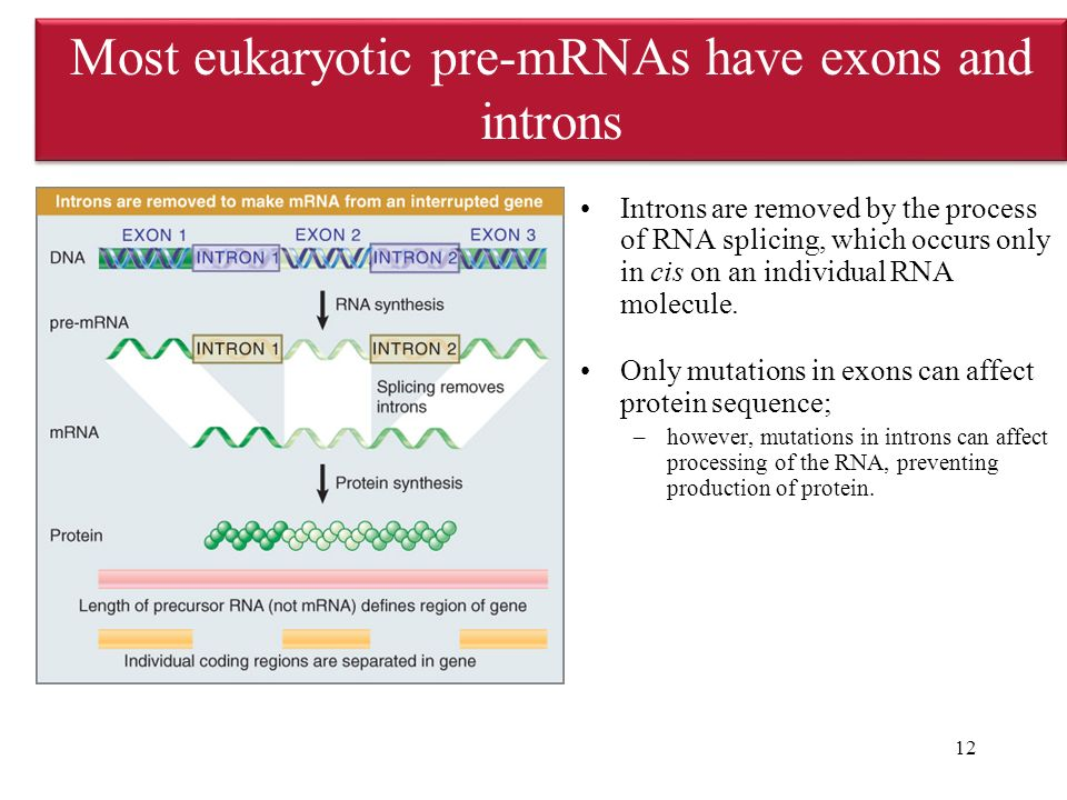 how to find introns and exons in a sequence