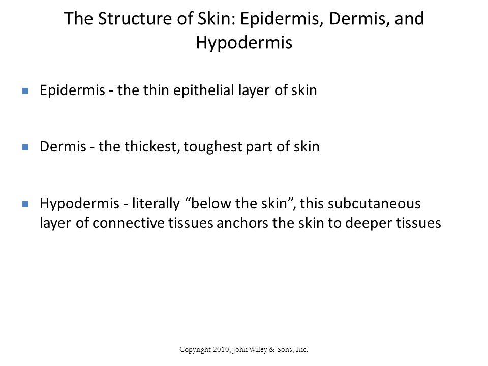 The Structure of Skin: Epidermis, Dermis, and Hypodermis