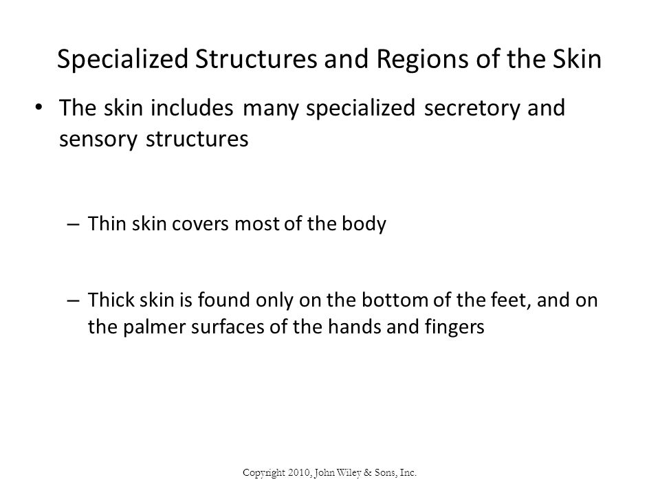 Specialized Structures and Regions of the Skin