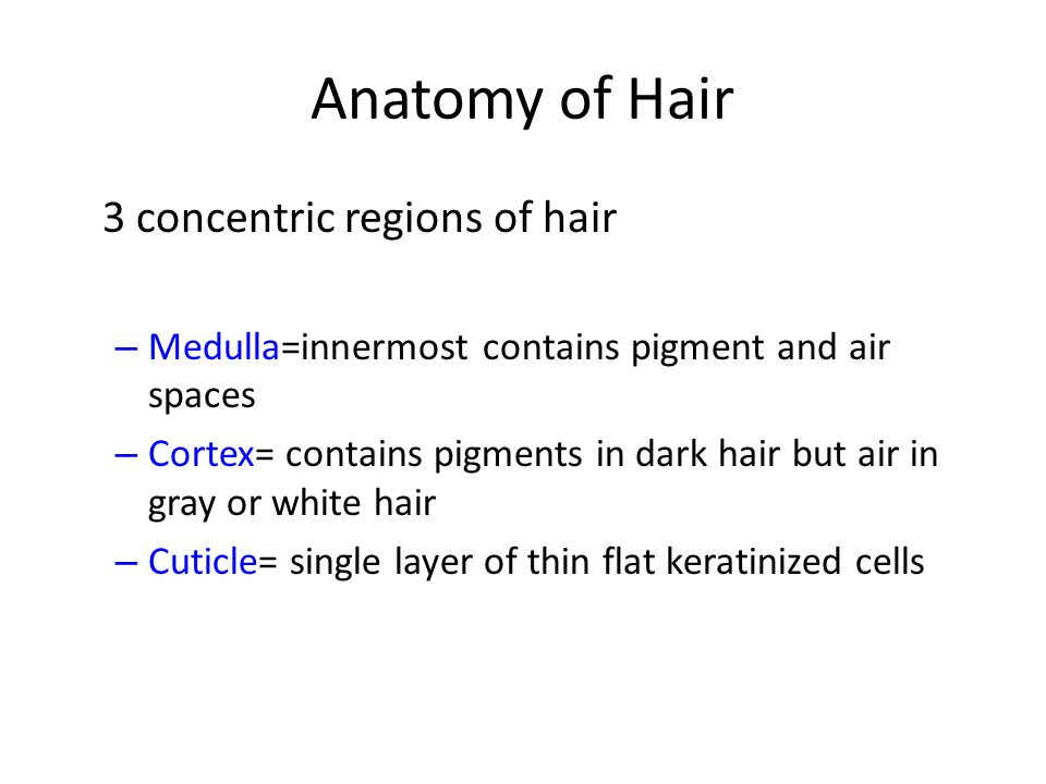 Anatomy of Hair 3 concentric regions of hair