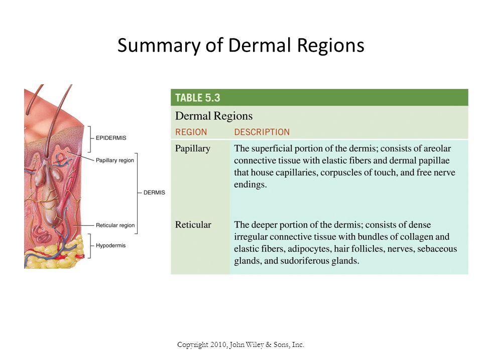 Summary of Dermal Regions