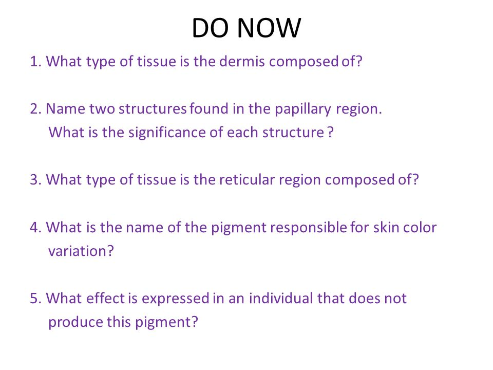 DO NOW 1. What type of tissue is the dermis composed of