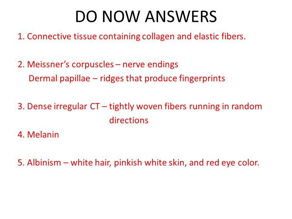 DO NOW ANSWERS 1. Connective tissue containing collagen and elastic fibers. 2. Meissner's corpuscles – nerve endings.